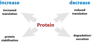 Protein Translation and Degradation Changes