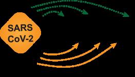 Covinet_Logo_AP